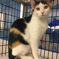 Adopt A Pet :: Peggy - Washington, IA