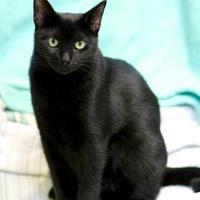 Adopt A Pet :: Angie - Charleston, SC