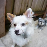 Adopt A Pet :: Sparks - Eugene, OR