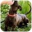 Photo 2 - Labrador Retriever Mix Dog for adoption in Mission Viejo, California - Hope