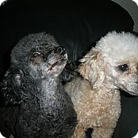 Adopt A Pet :: Alice - Cantonment, FL