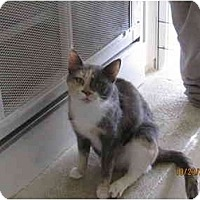 Adopt A Pet :: Kelly - Catasauqua, PA