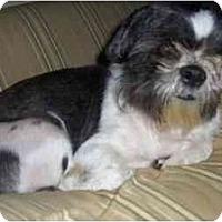 Adopt A Pet :: August - Mays Landing, NJ