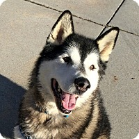 Adopt A Pet :: FRODO-Adoption Pending - Boise, ID