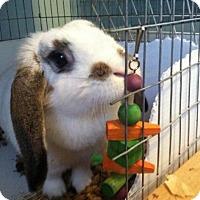 Adopt A Pet :: Maizie - Conshohocken, PA