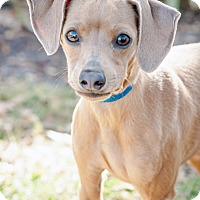 Adopt A Pet :: Tipsy - Gainesville, FL