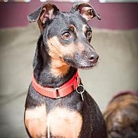 Adopt A Pet :: Merlin - Fargo, ND