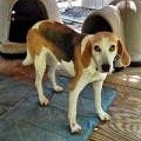 Adopt A Pet :: Jeanie - Bremo Bluff, VA