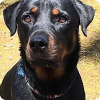 Adopt A Pet :: Jaime - Frederick, PA