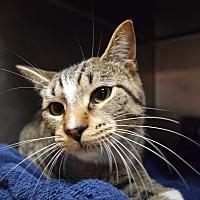 Adopt A Pet :: Blanche - Bay Shore, NY