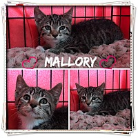 Adopt A Pet :: Mallory - Jeffersonville, IN