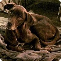 Adopt A Pet :: Annie - Knoxville, TN