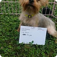 Adopt A Pet :: Sundance - Crump, TN