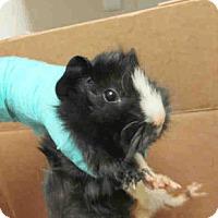 Adopt A Pet :: *Urgent* Selena - Fullerton, CA