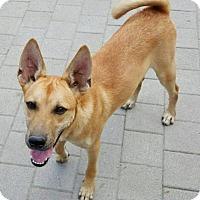 Adopt A Pet :: Kenny Yenchi - Seattle, WA