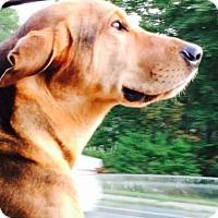 Adopt A Pet :: LUCA