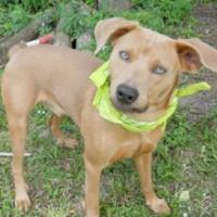 Adopt A Pet :: M&M - Loxahatchee, FL