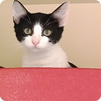 Adopt A Pet :: Salina - Brandon, FL