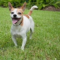 Adopt A Pet :: Pearl - Boston, MA