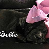 Adopt A Pet :: Belle - Des Moines, IA