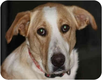 Collie Mix Dog for adoption in kennebunkport, Maine - Miss Riley-ADOPTED