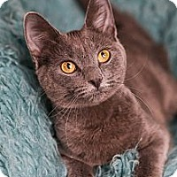 Adopt A Pet :: Cinderella - Eagan, MN