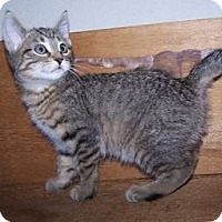 Adopt A Pet :: K-Lilliany7-Judah - Colorado Springs, CO