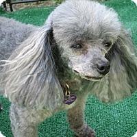 Adopt A Pet :: Pepper - Dover, MA