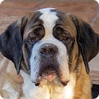 Adopt A Pet :: ATHENA - Glendale, AZ