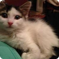 Adopt A Pet :: Oregano - East Hanover, NJ