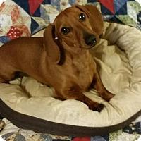 Adopt A Pet :: Stanley - Conroe, TX
