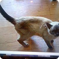 Adopt A Pet :: Rayna - Whitestone, NY