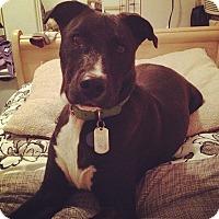 Adopt A Pet :: Danee - Cerritos, CA