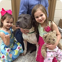 Adopt A Pet :: Zeus *Sensitive, People-Dog* - Kittery, ME