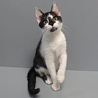Adopt A Pet :: Oreo - Seguin, TX
