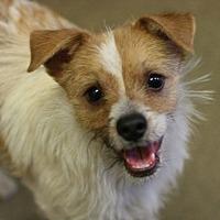 Adopt A Pet :: Pilot - Canoga Park, CA