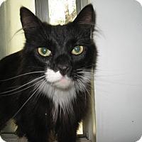 Adopt A Pet :: Lizzie - Fallon, NV