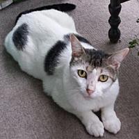 Adopt A Pet :: Tanzie - Raleigh, NC