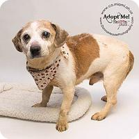 Adopt A Pet :: Orville - Amelia, OH