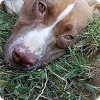 Adopt A Pet :: Ruby - Benton City, WA