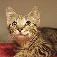 Adopt A Pet :: Franky - Grayslake, IL