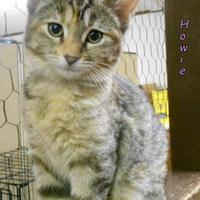 Adopt A Pet :: Howard - Oskaloosa, IA