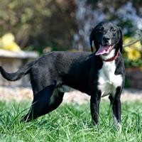 Adopt A Pet :: Houdine - Ottumwa, IA