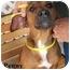 Photo 3 - Labrador Retriever Mix Dog for adoption in Slidell, Louisiana - Penny