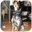 Photo 3 - Bluetick Coonhound Dog for adoption in Provo, Utah - Elvis