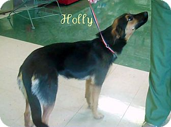 German Shepherd Dog Mix Dog for adoption in Greeneville, Tennessee - Holly