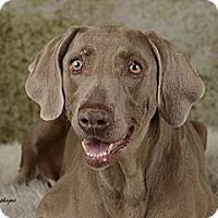Adopt A Pet :: AVA - Albuquerque, NM