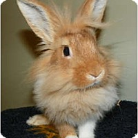 Adopt A Pet :: Jespah - North Gower, ON