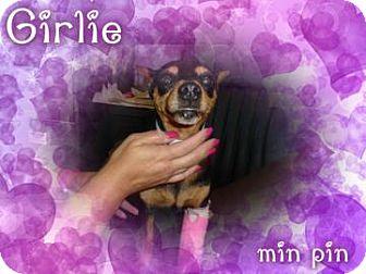 Miniature Pinscher Mix Dog for adoption in Desert Hot Springs, California - Girlie