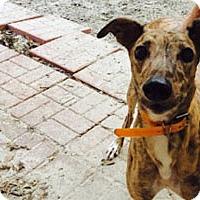 Adopt A Pet :: Lips - Pearl River, LA